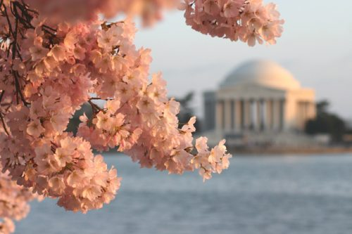 National Cherry Blossom Festival at the Tidal Basin (Courtesy: National Cherry Blossom Festival)